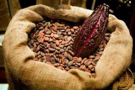 Cacao : investissement massif des multinationales