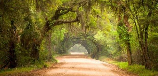 Investissement forestier