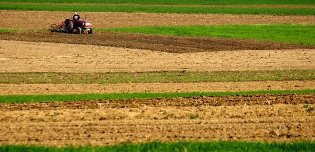 Investissement dans des terres agricoles