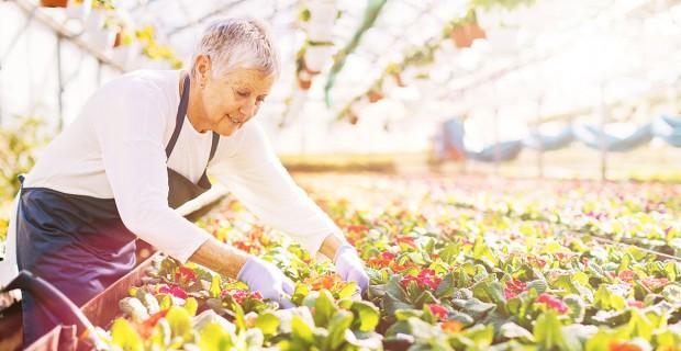Continuer de travailler après la retraite : les possibilités pour augmenter sa pension de vieillesse