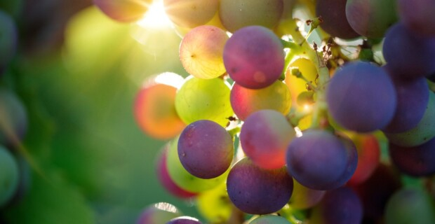 Investir dans le vin : Est vraiment rentable ?